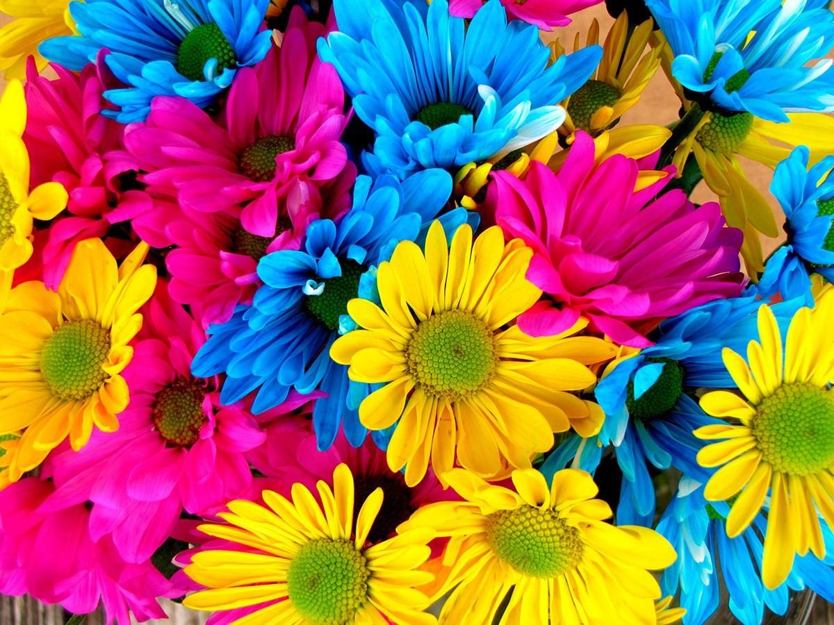 flores-colores