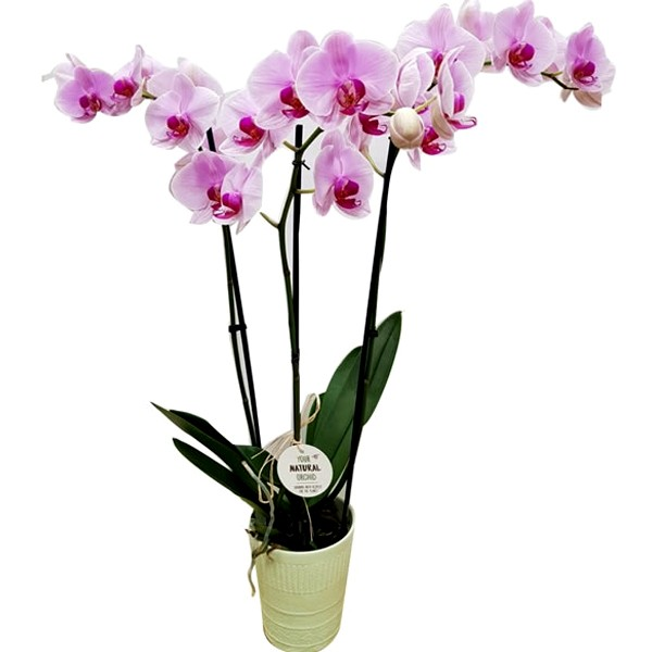 orquidea-de-color1
