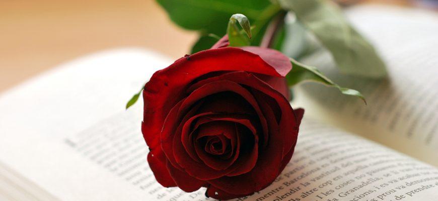 rosa-i-llibre-sant-jordi-copia-870x400